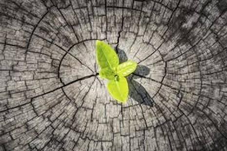 Resiliencia: cómo aprender de fracasos y llevar tu carrera al éxito..